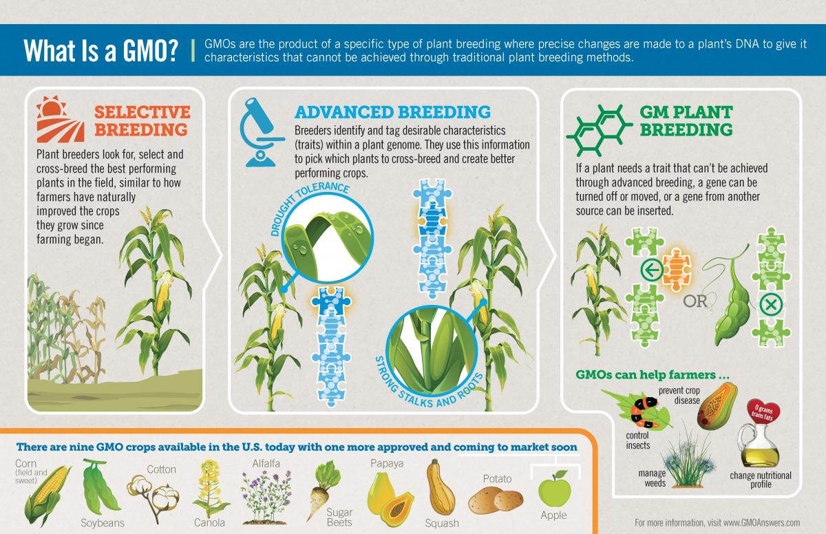 What is a GMO infographic.